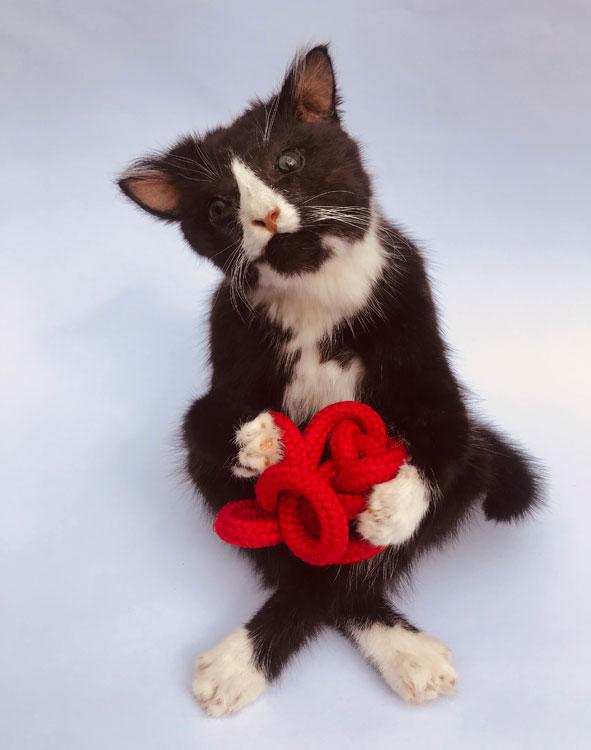 Zittende kat met knoop