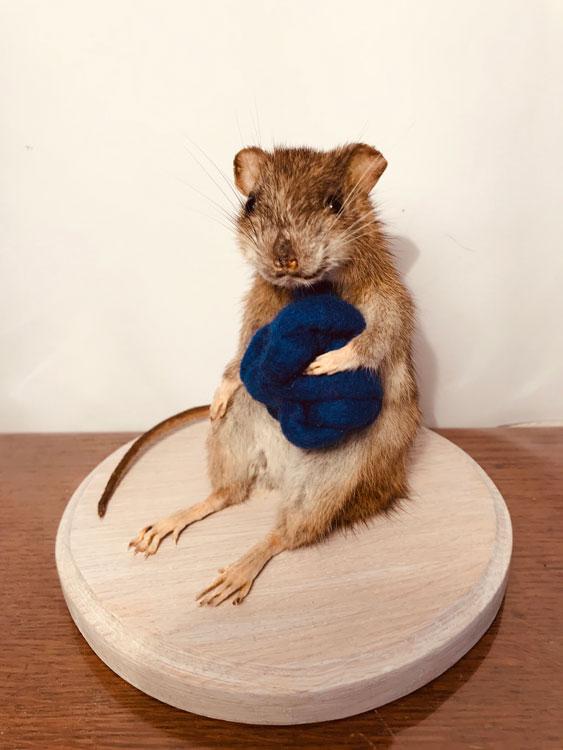 Zittende rat met knoop